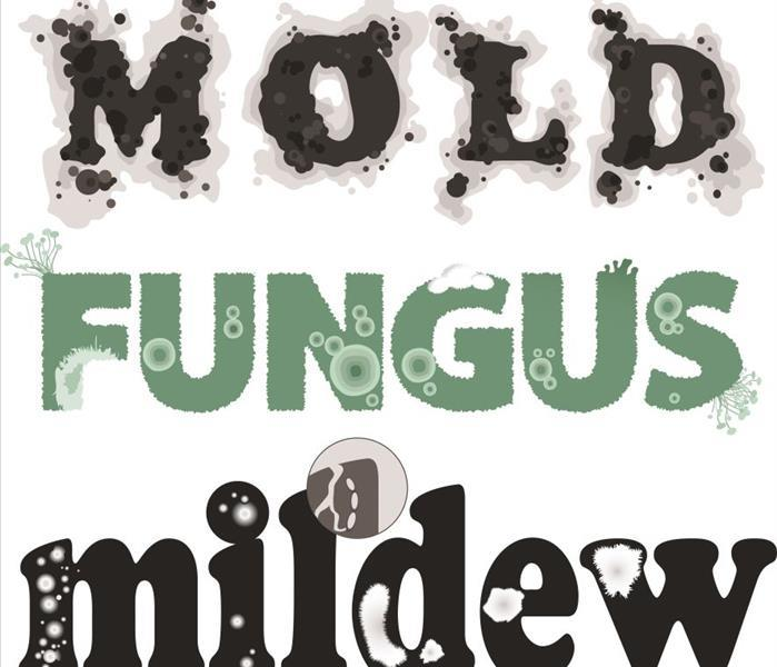 Mold Safety Tips